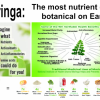 Moringa offer Health & Fitness